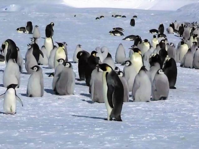 Akú špeciálnu schopnosť majú tučniaky?