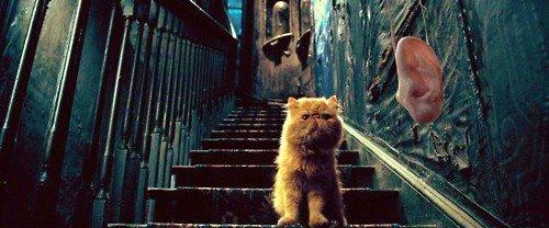 bouquinonslecturejeunesse.blogspot.com