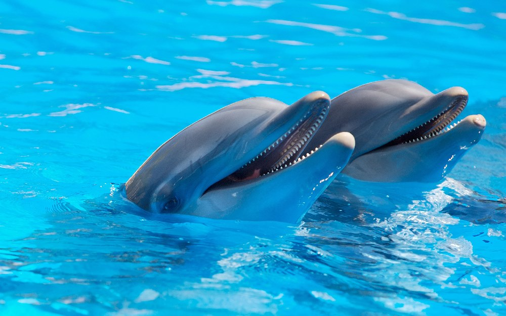 http://picscompany.com/pictures-of-dolphins/