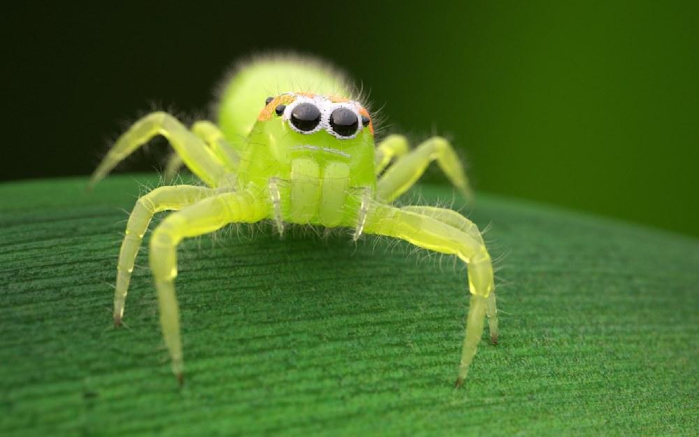 https://sk.pinterest.com/pauletticusj/cute-jumping-spiders/