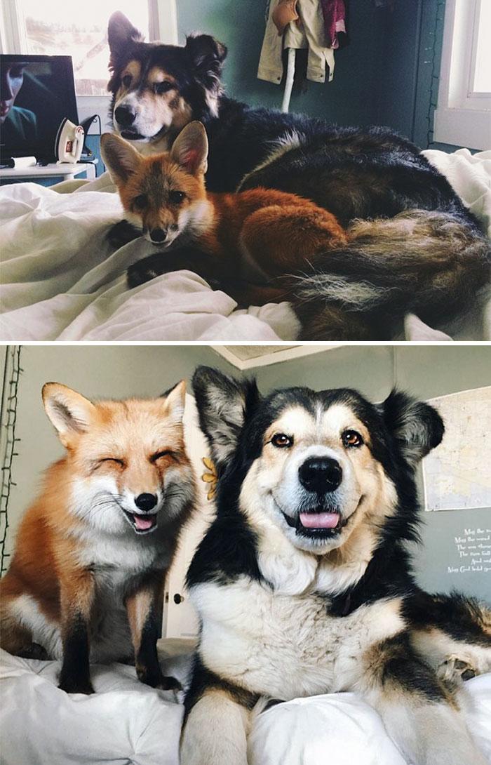 zvierata-vyrastanie