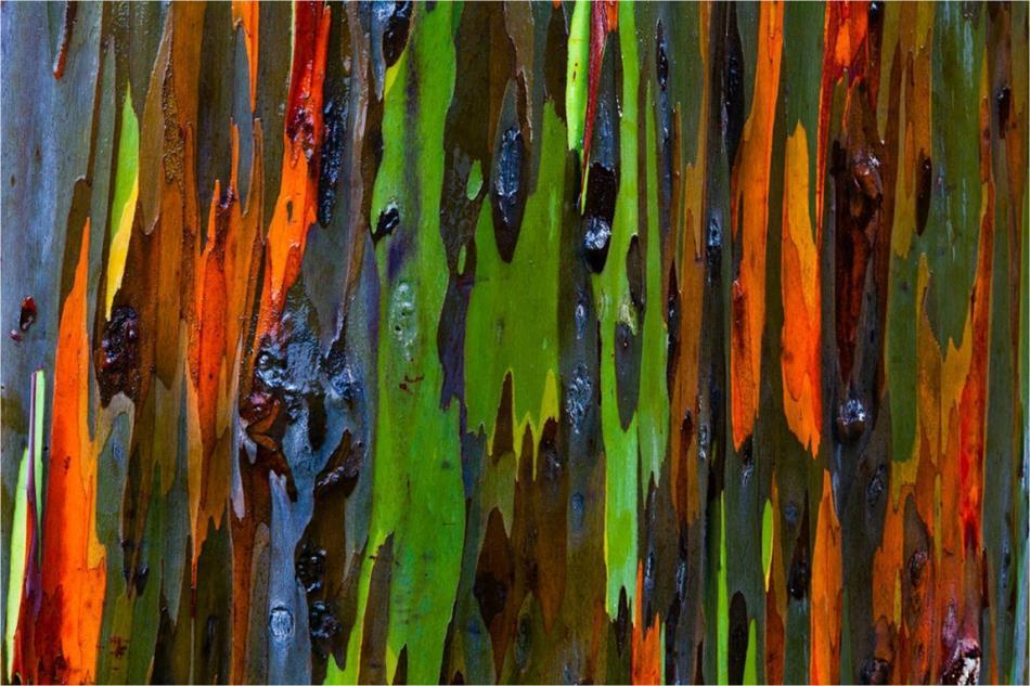 priroda-photoshop004-kopia