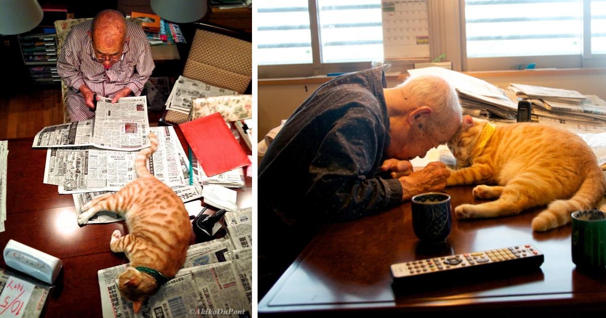 Chlpaté mačička šíriť fotky