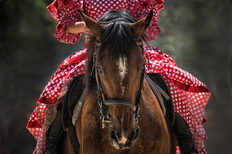 Muž kúpil dobrého známeho koňa a zaplatil za neho 600 eur. Koňa dal trošku do poriadku a predal ho ďalej za 700 eur. Krátko na to však koňa odkúpil späť za 800 eur a predal ho jeho dnešnému majiteľovi za 900 eur. Koľko muž na takomto obchodovaní zarobil?