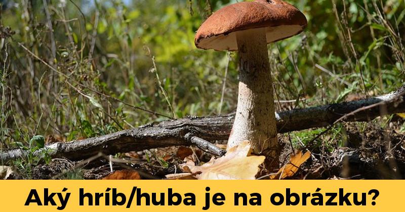 9b26ae9a9 Kvíz o hubách a hríboch vás preverí, či sa vyznáte v nich naozaj vyznáte