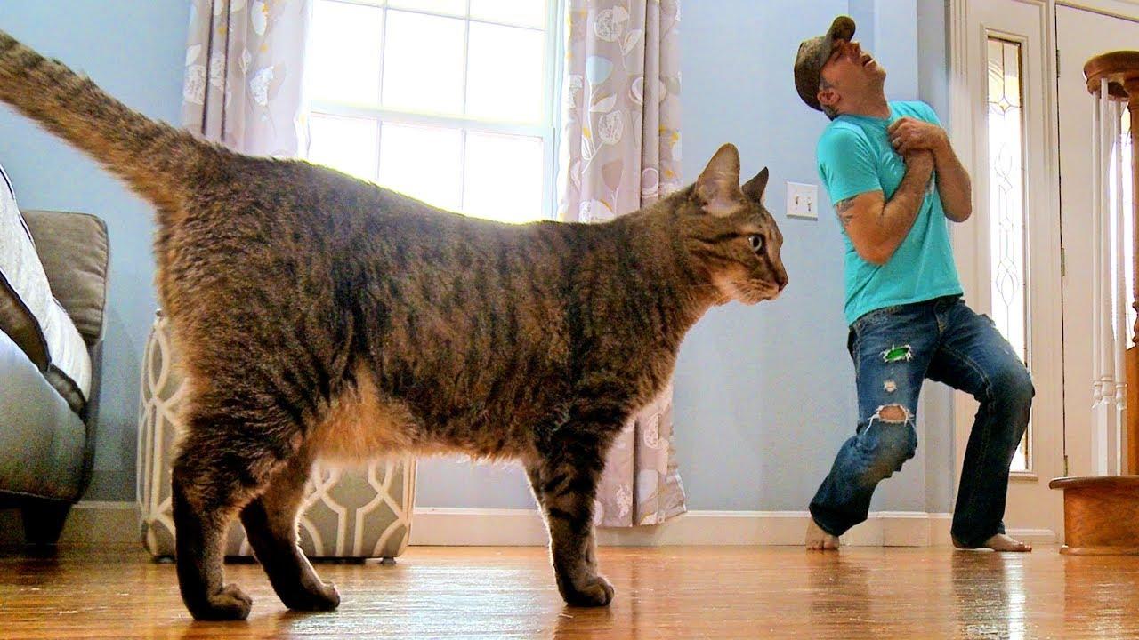 Silná mačička pics