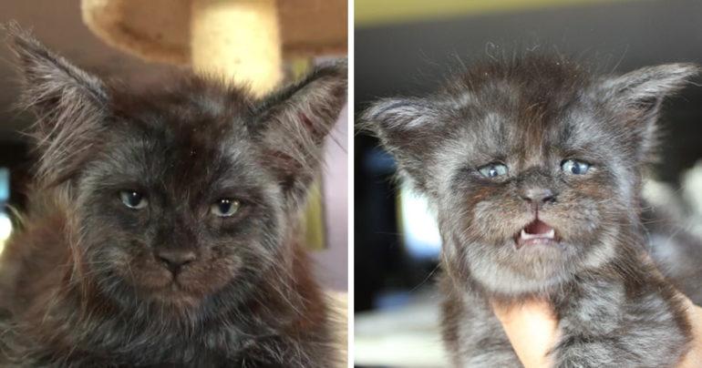 Fotografie tohto mačiatka sa stali okamžite virálnymi. Jej ľudská tvár  mätie milióny ľudí na celom internete d55896d21da