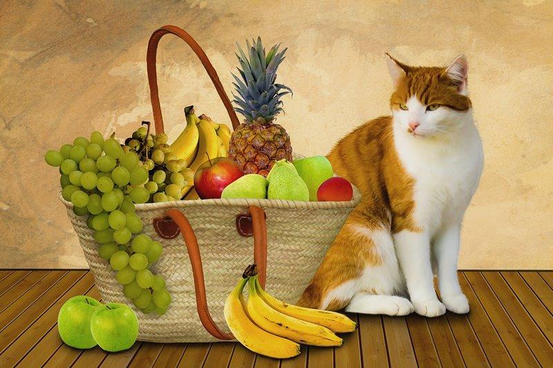 Mačka s ovocím