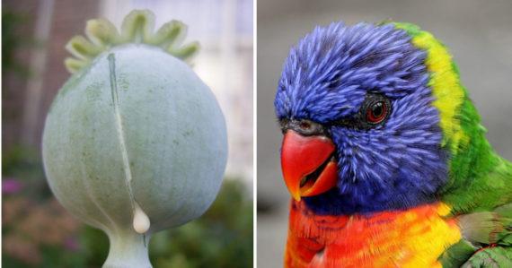 Škaredé veľké vtáky
