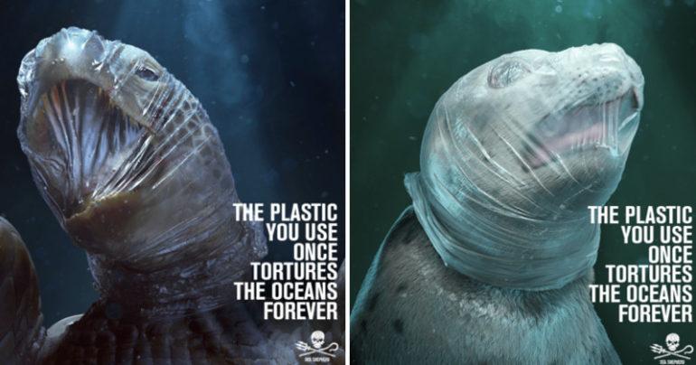 Plasty zabíjajú zvieratá v oceánoch