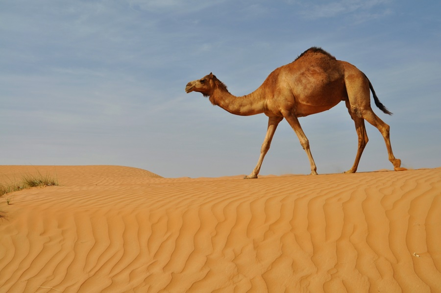 Púšť Wahiba