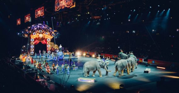 Slony v cirkuse