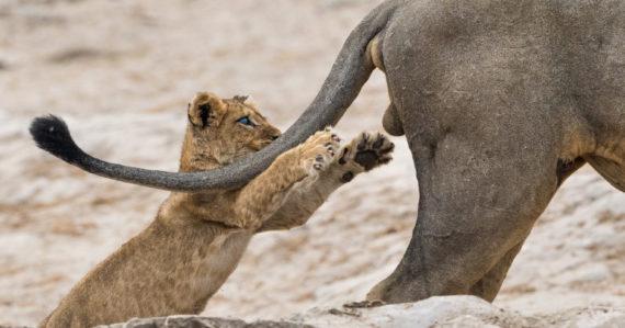 Prekvapenia, hádky aj kuriózne situácie. Zverejnili víťazov súťaže Comedy Wildlife Photography 2019