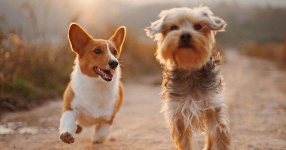 7 rokov je mýtus: Vedci zverejnili nový vzorec, podľa ktorého zistíte, aký je ľudský vek vášho psa
