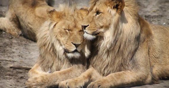 Zvieratá sú prirodzene bisexuálne. Nová štúdia prichádza s teóriou, ktorá môže znamenať prevrat