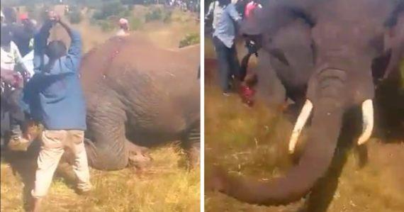 Internetom kolujú šokujúce zábery. Dedinčania sekerami zabili raneného slona, ktorý si hľadal potravu