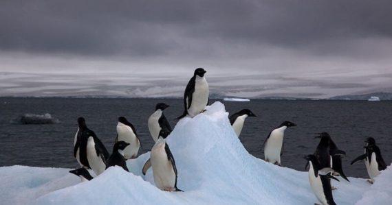 """Tučniaky sú """"najzvrátenejšie"""" tvory zvieracej ríše. Znásilňujú a bežná je u nich aj prostitúcia"""