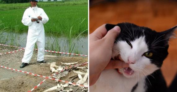 Mačky sa potajomky vkrádali do farmy na mŕtvoly, kde jedli rozkladajúce sa ľudské telá určené na výskum