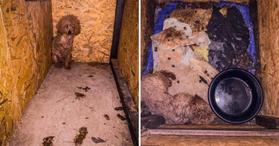 Slovenská nelegálna množiareň ako z hororu: Psy sú zavreté v malých boxoch plných výkalov a moču