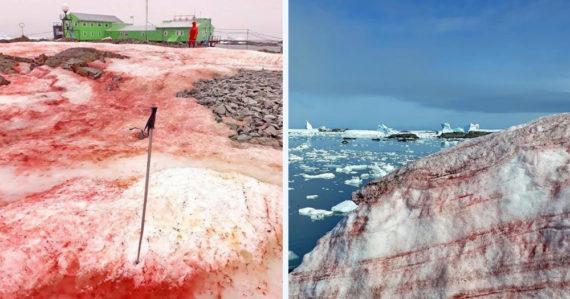 Antarktický ľad sa sfarbil do červena. Fenomén prispieva k rýchlejšiemu topeniu kontinentu