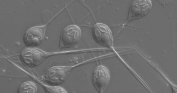 Vedci objavili prvý organizmus na našej Zemi, ktorý k životu nepotrebuje kyslík