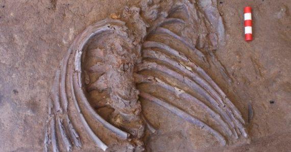 Archeológovia v Iraku odkryli kostru neandertálca a náznaky pohrebného rituálu