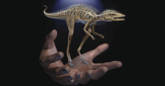 Toto je predchodca všetkých dinosaurov. Žil na Madagaskare a bol veľký ako mačiatko