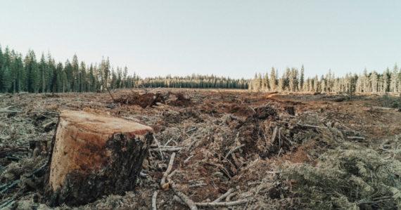 Európa stráca obrovské množstvo lesov: Ťažba dreva vzrástla za posledné roky o desiatky percent
