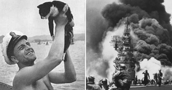 Nepotopiteľný Sam: Kocúr, ktorý prežil potopenie troch bojových lodí, je zvieracím hrdinom 2. svetovej vojny