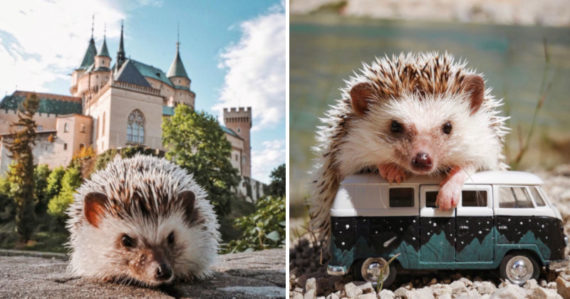 Ježko Ollie cestuje po Slovensku, spoznáva hory a prírodu. Fotografie Martiny a Andreja si zamilovali tisícky ľudí