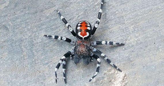 Vedci objavili nový druh pavúka. Pomenovali ho po hercovi z filmu Joker