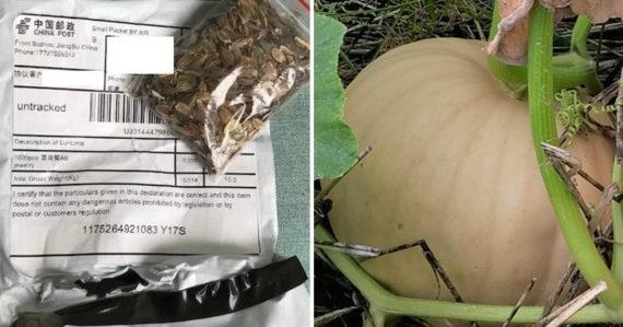 Muž zasadil záhadné semená, ktoré mu prišli z Číny predtým, ako pred nimi varovali úrady. Toto vypestoval