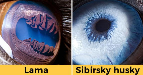 Fotí oči najrôznejších zvierat po celom svete. Strhujúce makrozábery niekedy vyzerajú ako z inej planéty