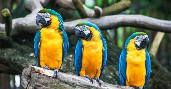 V ZOO parku museli z výbehov odstrániť 5 papagájov. Nevedeli si rady s ich vulgárnym vyjadrovaním