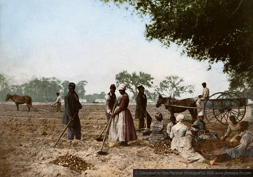 bp-plantation-colour-5f88b12f52b76-880