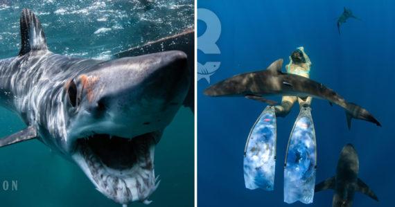 Lucia organizuje expedície so žralokmi: Ľudské mäso im nechutí. Miska žraločej polievky stojí približne sto dolárov