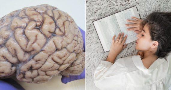 Zabudnite na vajce a sliepku. Vedci vysvetlili, či bol prvý mozog alebo spánok