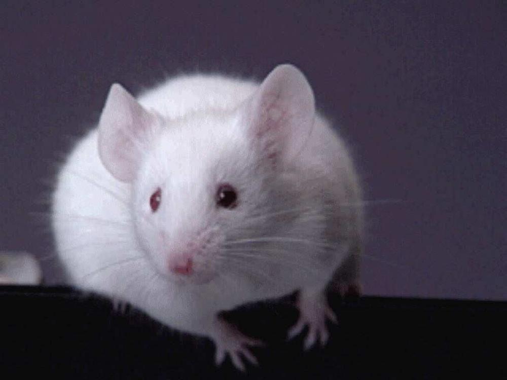 Malý Albert2